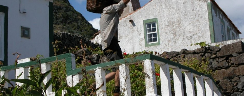vendemmia sull'isola di Santa Maria alle Azzorre